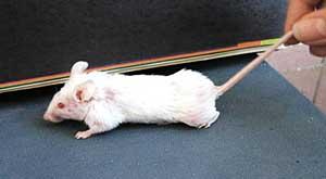 rat2.jpg